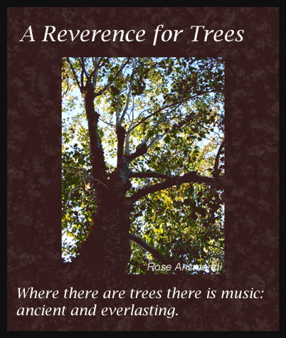 Reverence For Trees