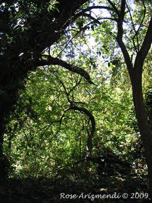 Creekside Tree