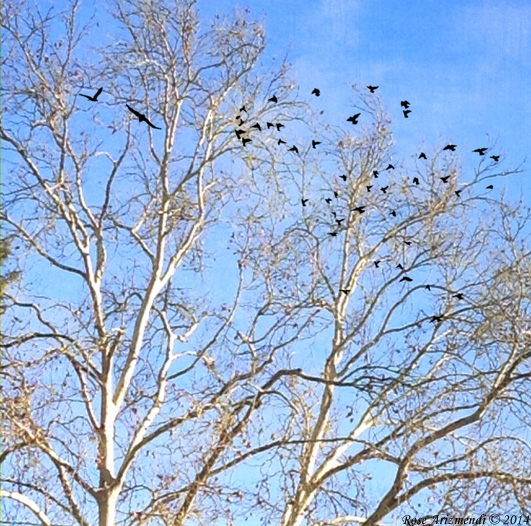 trees-birds-winter2014-rma2